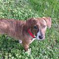Lola (5 mois) adoptée le 30 Avril 2016