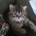 Lili (2 mois) 05 Decembre 2015