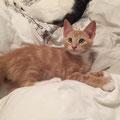 Tiko (4 mois) 23 Aout 2015