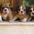 I piu bei cuccioli del mondo!!