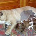 10 cuccioli!!!!