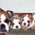 Rudy e i piccoli Wiston , Kubi , Condy.