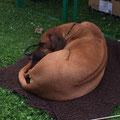 Auf fremden Decken schläft es sich am besten
