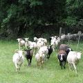 Notre troupeau de brebis