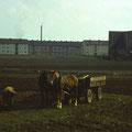Der letzte Schweinfurter Bauer am Bergl? - März 1960 - Mit großer Wahrscheinlichkeit handelt es sich um Valentin Brändlein, Bauernhof damals in der Niederwerrnerstr.20