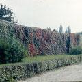 Stadtmauer am Hallenbad (heute Kunsthalle) im Oktober 1958