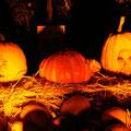 Nicht nur zu Halloween ein richtiger Knaller - Die sprechenden Kürbisse