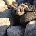 Steinige Hürden müssen überwunden werden! Overcoming stoney barriers!