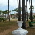 Cayenne : la place des palmistes