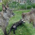 Mit Haddock und Faienne im Garten