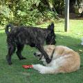 Ferienhund Coppin