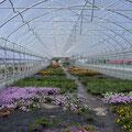 Blumenhaus 8 m Breite, Innenansicht