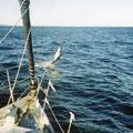 dauphin a bord de Loick