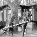 um 1940  |   junger Mann mit Pferdefuhrwerk (übrigens, dieser Herr fährt auch heute noch durchs Dorf, allerdings auf seinem Rad)