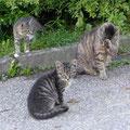 Junge Kätzchen spielen auf dem Bauernhof