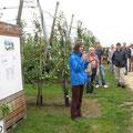 Margret Wicke vergleicht Ernteverfahren aus arbeitswirtschaftlicher Sicht (Foto: Balmer)