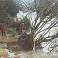 Abattage d'arbre à Quimperlé