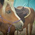 Sarahs Hafi-Dame mit neuem Westernsattel und farblich passenden Pad ;-) Schaut schick aus!!