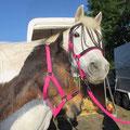 """Sami und Shayga unterwegs im Auftrag """"Pferdelädchen"""" :-)"""