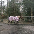 Und nochmals Annika mit ihrer neuen gebrauchten Regendecke ;-)