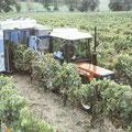 Fiatagri 70-86 DT Weinbauschlepper (Quelle: CNH)