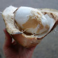 ココナッツ in コーチン
