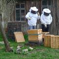 Kulturdenkmal Haus Ayen, 2012 Honigproduktion auf dem Grundstück