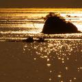 廿日市市阿品にて 金色に染まる宮島聖崎前を航行する牡蠣漁船 【撮影:2010.1.8 8:22】