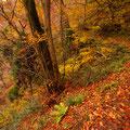 秋色の遊歩道