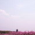 総社市 桃の花咲く備中国分寺 【撮影:2011.4.11】