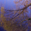 府中市上下町 上下川 川面に映る並木 【撮影:2010.12.4】