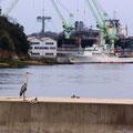 尾道市土堂 海岸通り 『てっぱん』の堤防? 【撮影:2009.3.8】