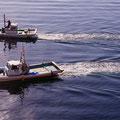 いまどきの朝<イワシ漁船> 【2012.10.28】