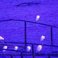 廿日市市地御前 【撮影:2011.12.21】