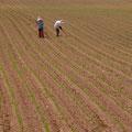 撮影:2010.05.31 農地の記憶 ~帯広の広大な農地~