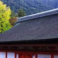 厳島神社と大銀杏
