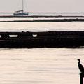 牡蠣養殖棚で一休みする孤鵜とヨット   廿日市市阿品 【撮影:2009.9.20】