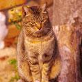 呉市警固屋町 高烏台公園近くで出会った猫 【2012.1.22】