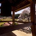 円光寺鐘突き堂にて 【2013.4.8】
