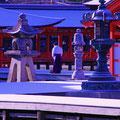 厳島神社回廊床の雪掃除  【2012.2.3】