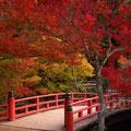 昨年(2010.11.12)撮影した もみぢ橋 の紅葉です。