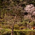 広島市佐伯区湯木町 里山の春 【撮影:2010.4.6】