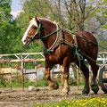 撮影:2010.05.30  馬たちの記憶 ~帯広 早朝トレーニング中のばん馬~