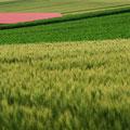 撮影:2011.07.17 農地の記憶 ~美瑛町 丘の中の赤い屋根~