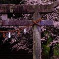 駅近くの椎尾(しいのお)八幡宮 【2012.4.11】