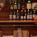 萩市 蔵元『中村酒造』の看板ネコ 【撮影:2010.4.10】