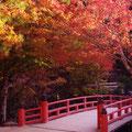 今年(2011.11.16)の紅葉谷 もみぢ橋