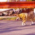 呉市警固屋町 高烏台公園近くで出会った犬 【2012.1.22】