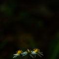 『おおの自然観察の森』にて 【2012.10.24】