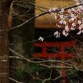 紅葉谷公園四之宮神社 【2013.3.24】